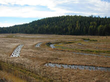 Strategically placed riparian plantings along a meandering section of the Middle Fork John Day River, Oregon.