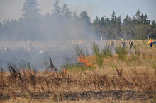 Washington State's Joint Base Lewis-McChord ideal location for small prescribed fire research burn. Flames about 1.5-m high move through grasslands with a moderate breeze. Photo by Ellen Eberhardt.