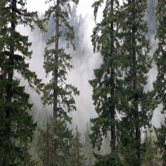 Douglas-fir in western Oregon. Warmer, wetter conditions will likely favor Douglas-fir growth, while accumulation of Douglas-fir biomass in warmer, drier conditions may be more limited.
