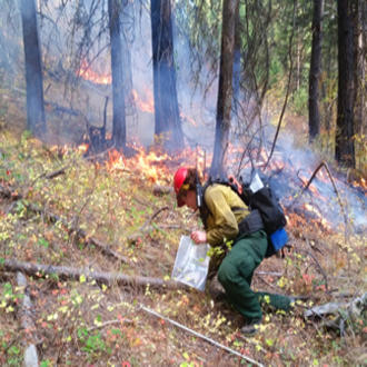 A researcher collects fuel samples during a prescribed burn as part of Washington state's forest resiliency burning pilot study.