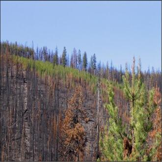 Aftermath of the2007 Tripod Fire in Washington.