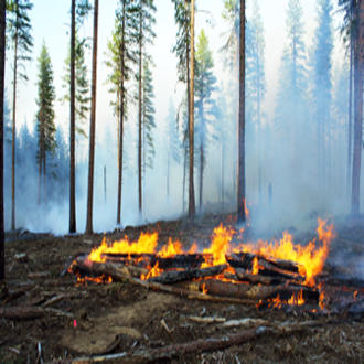 Scientists designed an experiment involving a controlled burn in Pringle Falls Experimental Forest, Oregon, to learn more about the effects of intense heat on soil and subsequent tree regeneration.