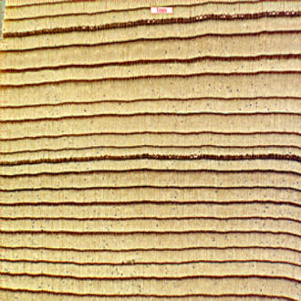 "Douglas-fir wood at 57x magnification. Chemical analysis shows that Douglas-fir wood from different geographic regions has distinct chemical ""fingerprints,"" which can be used to identify the geographic origin of the wood."