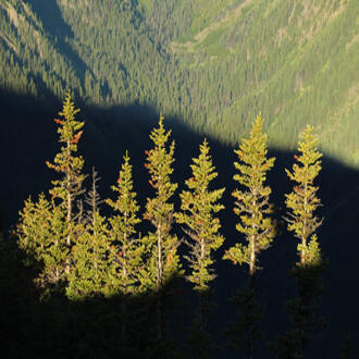 View of forested landscape in Olympic National Forest