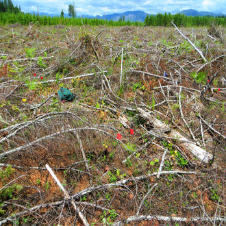 A plot with heaving logging debris one year after harvest in Matlock, Washington. USDA Forest Service photo by Dave Peter.
