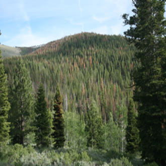 The Fremont-Winema National Forest, Oregon. Several ranger districts on the forest collaborated with researchers to develop a tool for quickly prioritizing the removal of pines in poor health.
