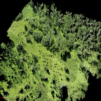 Computer-generated image of vegetation derived from point cloud data.