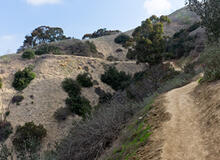 Chaparral vegetation in the hills above Whittier, California. Photo courtesy of Northwalker Wikimedia Commons.