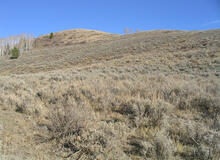 Sagebrush in western Wyoming.