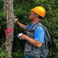 Monitoring emerald ash borer parasitoids.