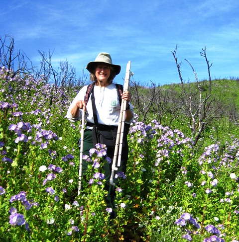 Field sampling in spring post-fire