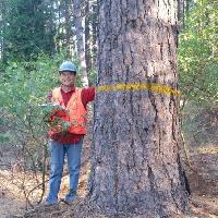 Picture of Ponderosa pine LOGS study