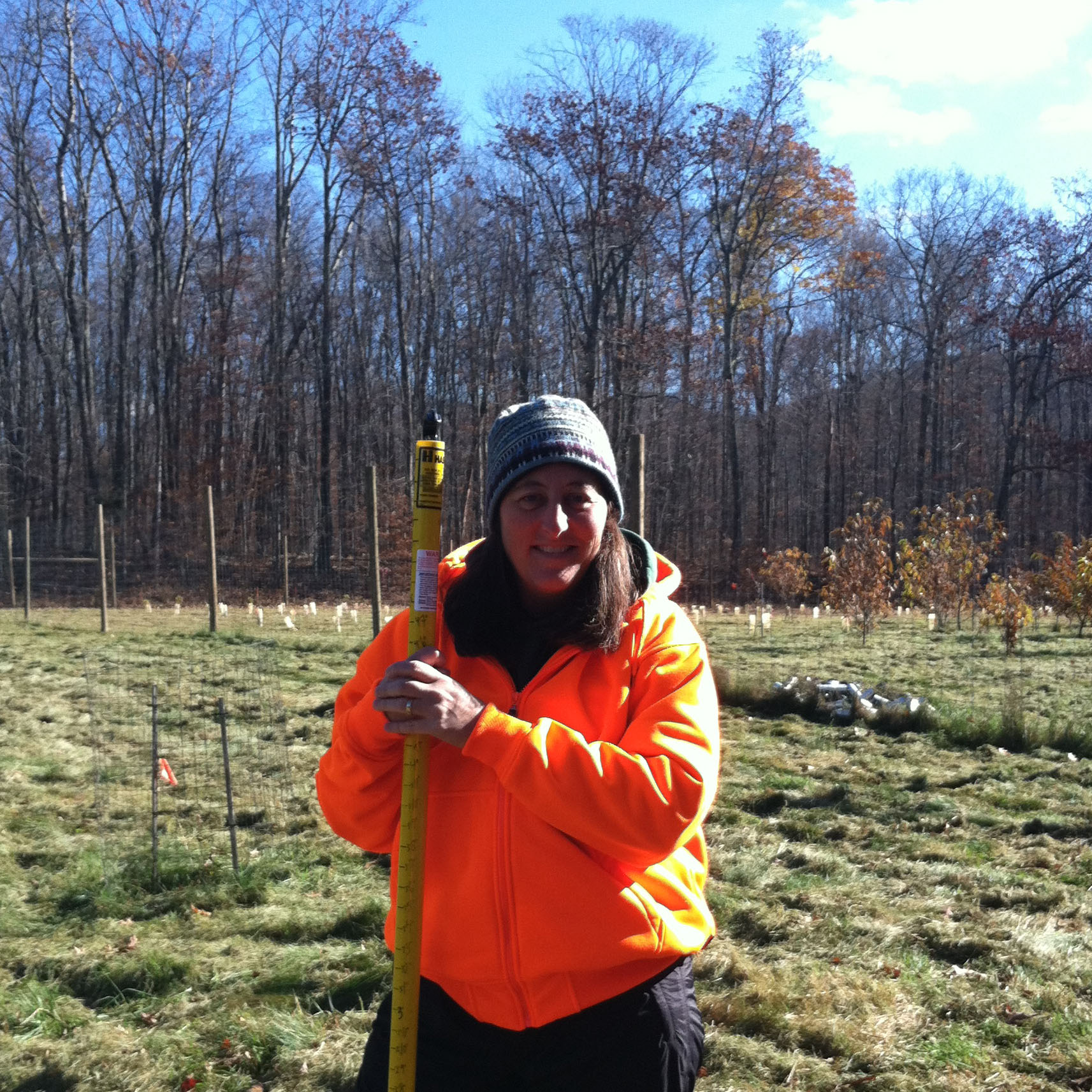 Measuring growth of American chestnut saplings on the Green Mountain National Forest, Vermont.