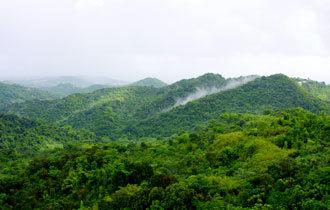 Photo of View of the Bisley Experimental Watersheds, Luquillo Experimental Forest, Puerto Rico with Cecropia schreberiana (yagrumo) in the valleys and Dacryodes excelsa (tabonuco) in the ridges. Forest Service