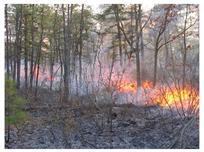 Photo of A prescribed fire conducted in the Pine Barrens of New Jersey.  NRS-06 researchers are measuring the recovery of carbon and water cycling following fire and insect defoliation in forests in the Pine Barrens. Forest Service