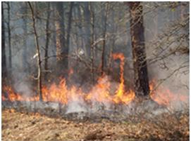 Photo of Fire spread and smoke transport through forest vegetation, as shown in this photograph of a prescribed burn in the New Jersey Pine Barrens, can be influenced by atmospheric turbulence (wind gusts). Forest Service