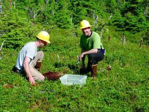 Harvest pattern influences survival of forestdependent species
