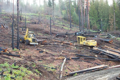 Photo of Skidder and delimber operating on a fuel management research project in the Priest River Experimental Forest in Idaho. Forest Service