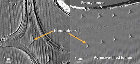 Photo of Atomic force microscope image of nanoindents placed in a Loblolly pine cell wall. For perspective, a typical human hair is about 50 m in diameter. Joseph E. Jakes, Forest Service