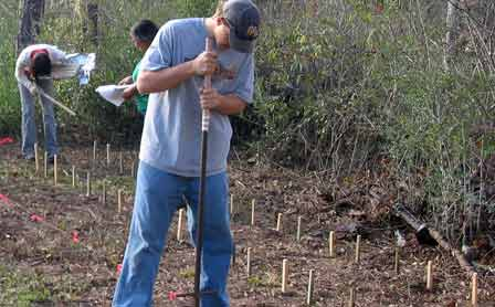 Stake plots in the Harrison Experimental Forest, Saucier, Mississippi, evaluate the durability of wood products. Stan Lebow, Forest Service