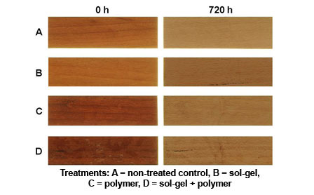 Photo of Surface color of modified (B, C, D) and unmodified (A) western red cedar before (0 h) and after (720 h) of artificial weathering in a WeatherOmeter. Steve Schmieding, Forest Service