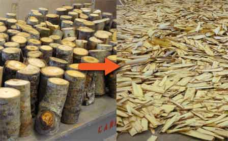 Typical aspen slash wood (left) and flakes (right) sliced from the slash wood. Steve Schmieding, Forest Service