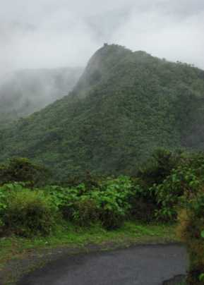 Photo of Tropical Montane Cloud forest from the Luquillo Experimental Forest, Puerto Rico. van Vicens, Forest Service