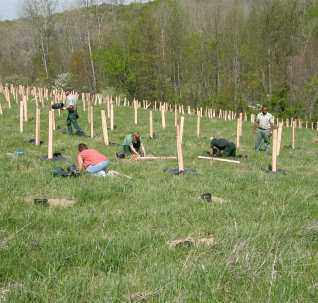 Photo of Planting American chestnut on a reclaimed mine site on the Wayne National Forest. Hiremath, Forest Service