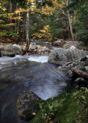 Photo of Forested ecosystem in the White Mountains of New Hampshire. Ken Dudzik, Forest Service