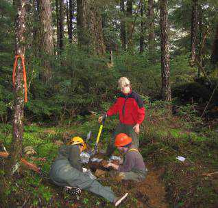 Photo of Field crew collecting soil samples on the banks of Rio Roberts creek on Prince of Wales Island, Alaska. Dave D'Amore, Forest Service