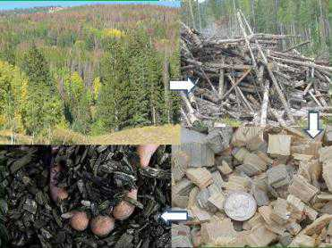 Photo of The beetle-killed to biochar process. Forest Service