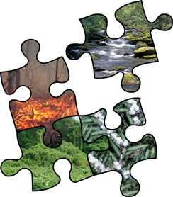 Photo of The Comparative Risk Assessment Framework and Tools (CRAFT) is a user-friendly, Web-based support system that helps natural resource managers address uncertainties inherent in land management decisions. Forest Service