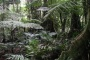 Picture of Hurricanes Disturb Non-tree Subtropical Wet Forest Species Composition