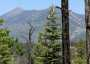 Photo of The San Francisco Peaks in northern Arizona are sacred to many Native American groups. Forest Service