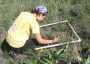 Photo of Sampling a grassland site invaded by spotted knapweed in western Montana. Forest Service