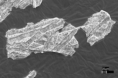 Electron micrograph image showing the unusual failure of release coating on a postage stamp. Dark regions are pressure-sensitive adhesive; light regions are silicone-release coating that has pulled away from backing paper liner. Tom Kuster, Forest Service