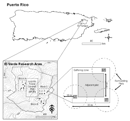 Photo of Block and plot structure in El Verde research area.  Inferred area covered by each block is 40,000 m2 and the complete study area covers around 106 m2.  Forest Service