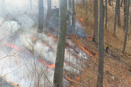 Photo of Repeated prescribed fires may improve the regeneration potential of oak in canopy gaps. Forest Service