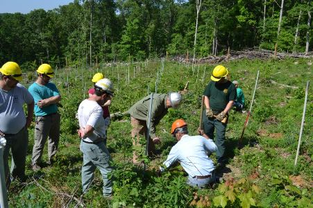 Photo of Establishing a blight resistant planting at Buck Creek on the Hoosier National Forest in Spring, 2012. James McKenna, Forest Service