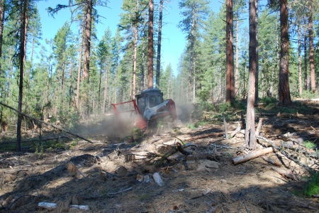 Photo of Fuel is masticated prior to a prescribed burn on a study plot in the Pringle Falls Experimental Forest. Rhonda Mazza, Forest Service