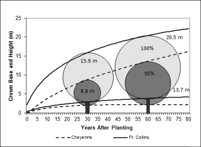 Photo of Tree height, crown base, and leaf area for same-aged green ash in Fort Collins, CO and Cheyenne, WY. Upper lines represent height, lower lines represent height to first branch.  Ash have only 55 % of the Fort Collins' ash leaf area, largely due to differences in climate and soils. Forest Service