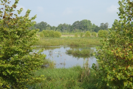 Photo of Former cropped wetland restored to a wetland by the Southeastern Wetland Reserve Program. Joel Gramling, The Citadel