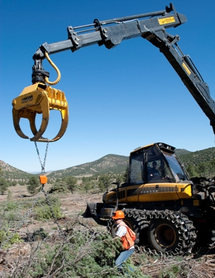 Photo of Chaining a pinyon tree to a crane scale. Forest Service
