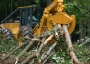 How much forest biomass to leave behind or remove Shawn Grushesky, West Virginia University Appalachian Hardwood Center