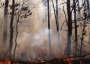 Photo of A prescribed fire burning in the New Jersey Pinelands. Michael Gallagher, Forest Service