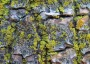 Picture of Lichen Communities Serve as Canary in the Coal Mine for Air Pollution