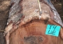 Photo of A koa log. Forest Service