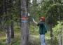 Photo of Researcher applying pheromone-releasing flakes to a whitebark pine bole. <i>Forest Service</i>