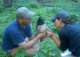 Photo of RMRS researchers attaching a color band to a captured and hooded Mexican spotted owl. Forest Service