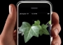 Picture of U.S. Forest Service Research Uses New Invasive Plant Phone Application
